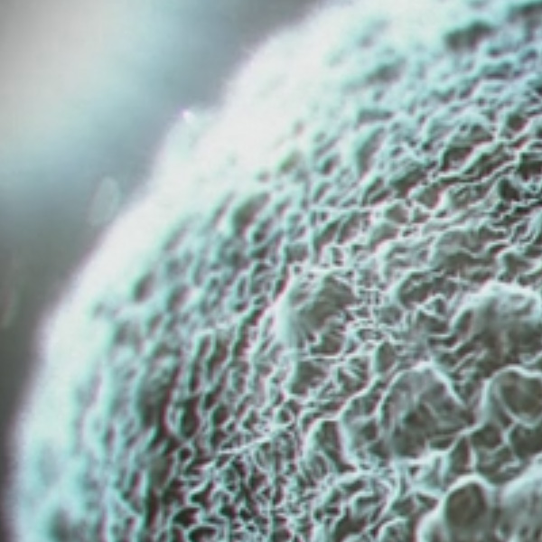 Atmospheric Sperm Animation